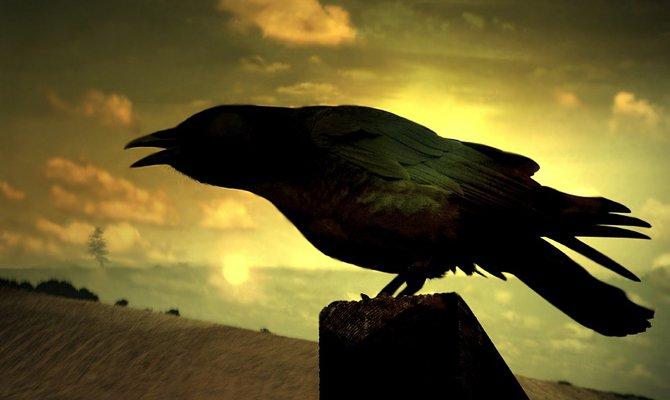 Ворон на закате