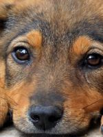 20 августа - Всемирный день бездомных животных