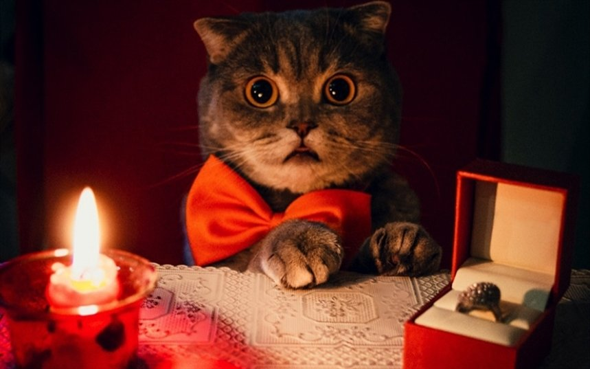 Кот с кольцом