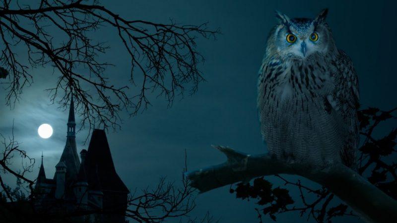 Символы Хэллоуина: совы, летучие мыши, черные кошки...
