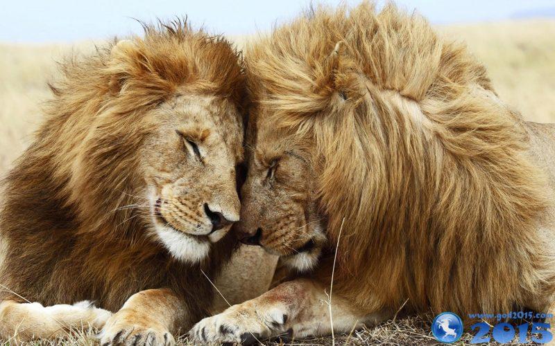 лев любовный гороскоп 2015