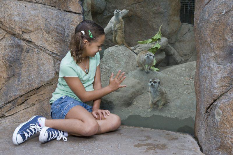 Важно приобщать детей к жизни в содружестве с природой. Фото с сайта sandiegoessentialguide.com