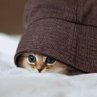 Игра Найди кота онлайн