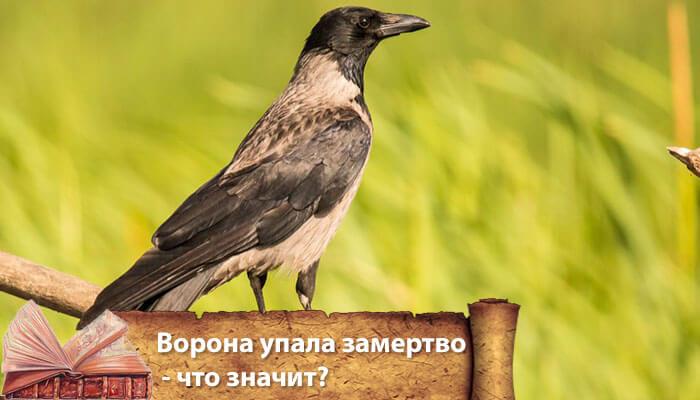примета ворона села на машину
