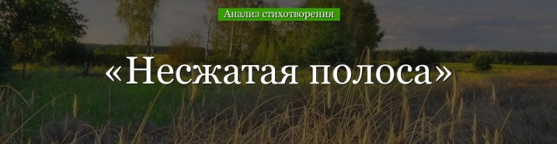 Анализ стихотворения «Несжатая полоса» Некрасова