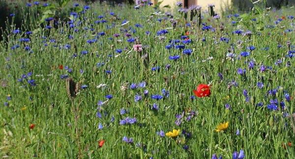 Полевые цветы Анализ стихотворения