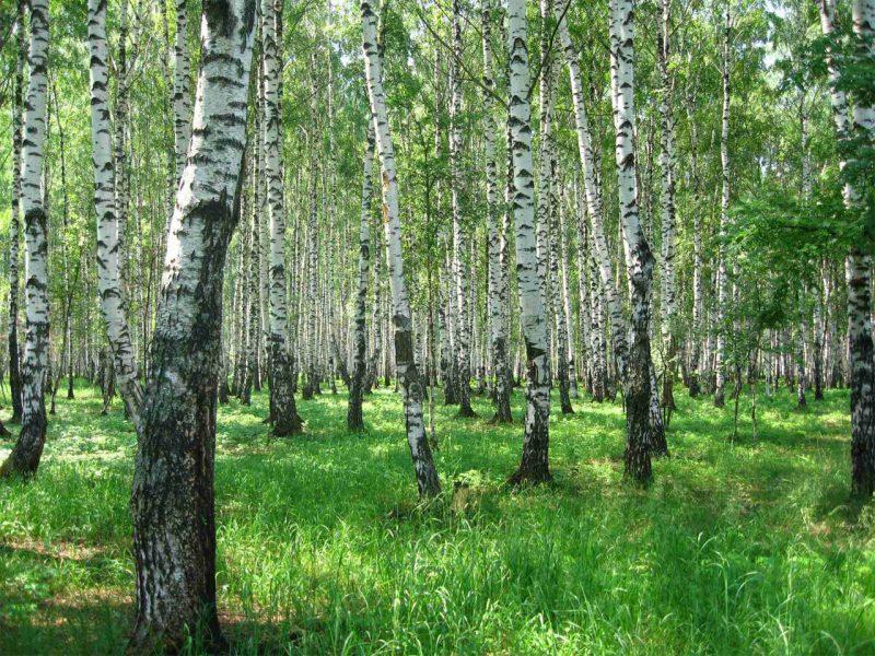 Леса нужно беречь. Фото с сайта adamast.ru