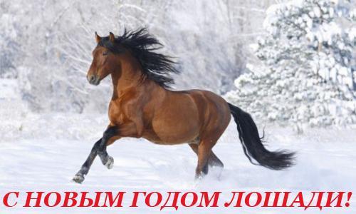 Лошадка - поздравление с Новым Годом ЛОШАДИ