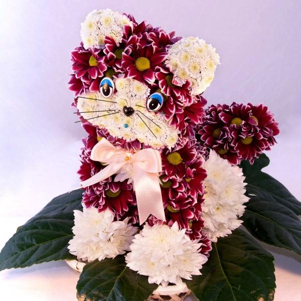 котик из цветов