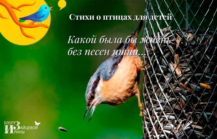 Стихи о птицах